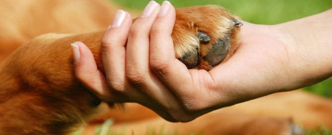 Protect your pet and yourself from lyme disease ticks this season